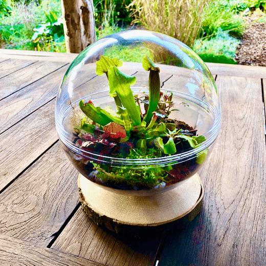 Plantenterrarium met vleesetende plantjes