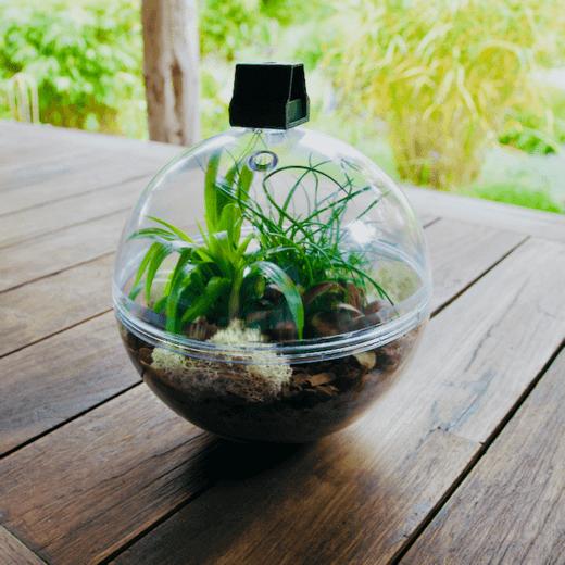 Doorzichtige Bal met plantenterrarium